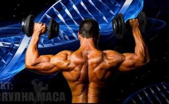 Класиране на пептиди по ефект и действие за мускулна маса или релеф.