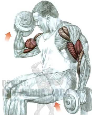 Основни упражнения за бицепс за начинаещи и напреднали!